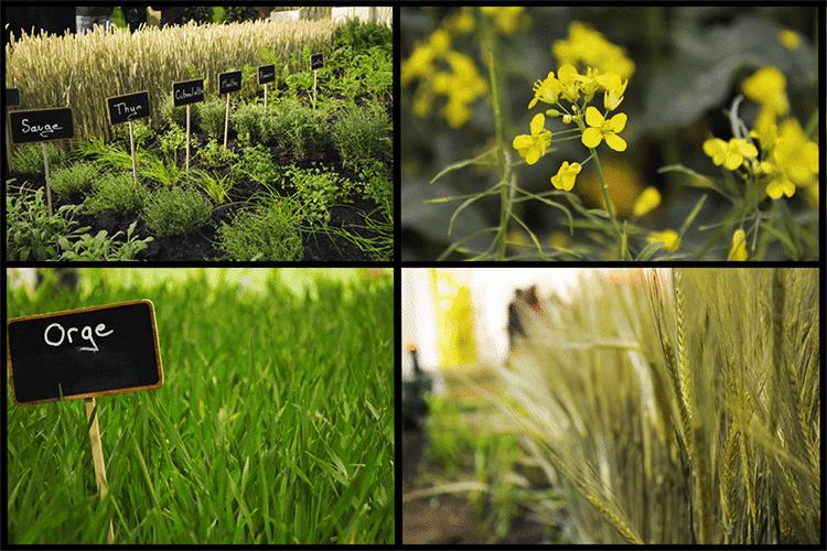 agriculture connectée