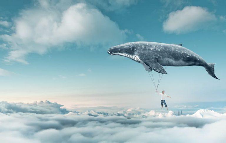 défi de la baleine bleu
