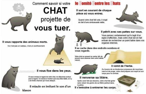 lolcats comité contre les chats