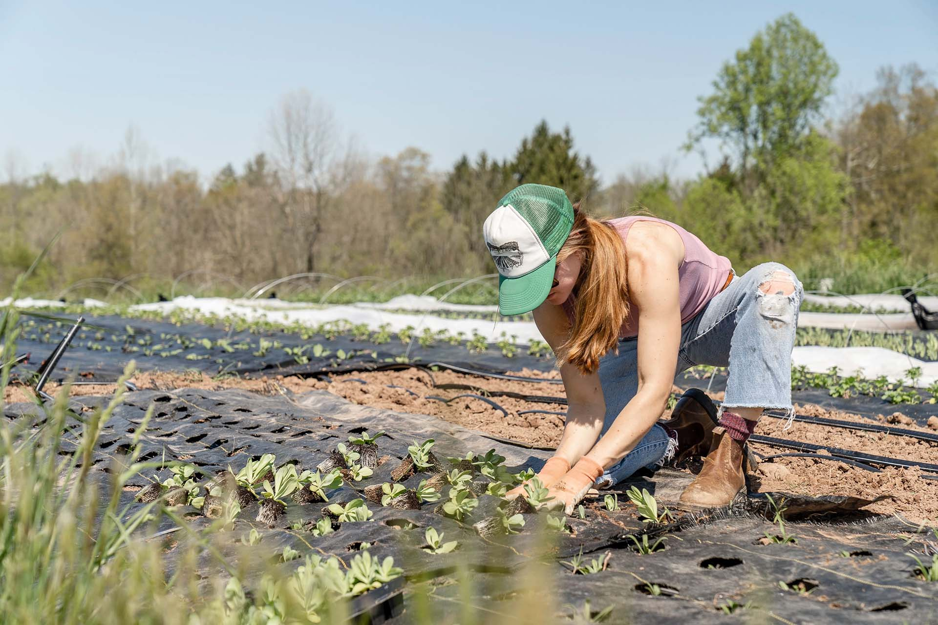 connexion internet agriculteurs réseaux sociaux
